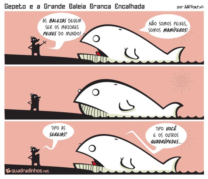 Baleia Mamífero